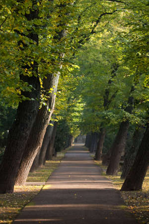 sloping: peaceful path between alley of sloping trees
