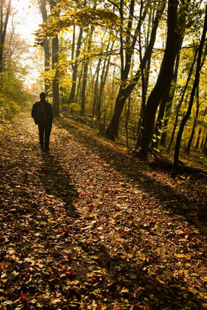 healthy path: man hiking in the forest in autumn