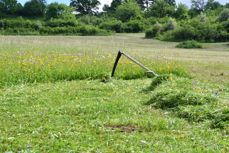mowing the grass in the spring manual with scythe