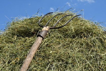 stocked hay on the meadow Imagens