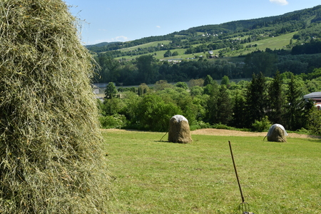 stocked hay on the meadow Stock Photo