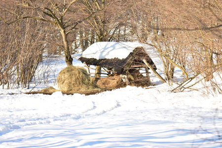 Fodder rack with hay for deer in winter