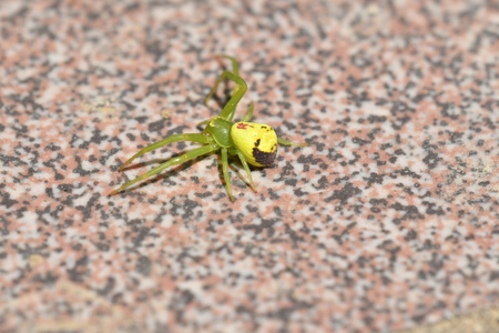 hidden green spider insects on the grass