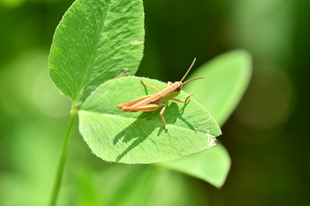 hidden grasshoppers insects on the grass Stock Photo