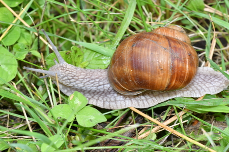 snails on the grass