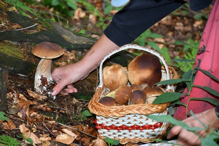 Mushrooming in the forest Stock Photo