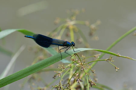Macro Dragonfly near the river on the flower
