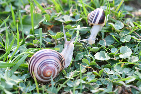 herd of snails walking on the grass