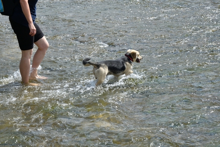 Refreshing walk in river in hot sommer with dog
