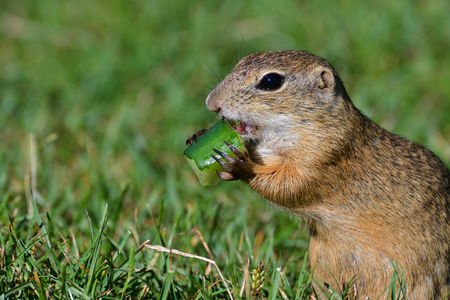 babies: Squirrel lurking and eating in the grass Stock Photo