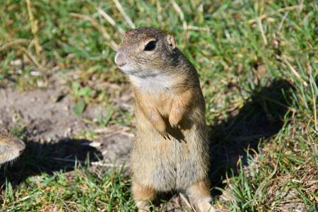 lapin: L'écureuil se cache et mange dans l'herbe