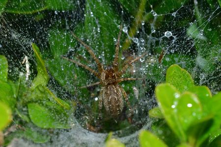 spin spint zijn web in de boom Stockfoto
