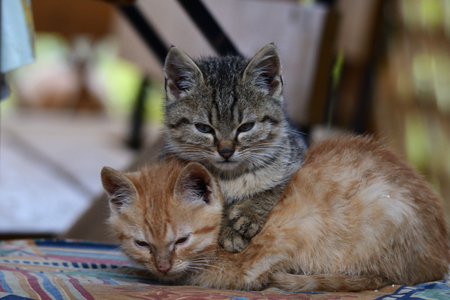 Portrait of small kittens snuggling together