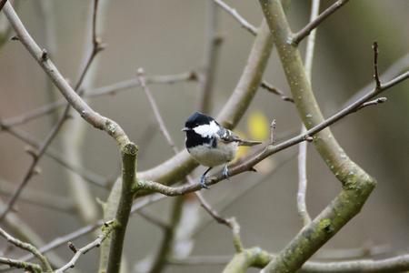 titmouse nuthatch on the bird eats seeds