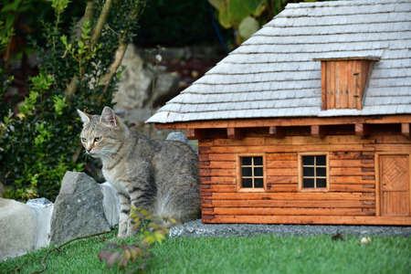 a cat guarding an ornamental house as a guard dog Stock Photo