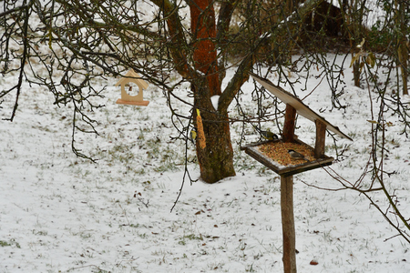 fodder rack with sunflowers millet grain seeds for feeding birds in winter snow