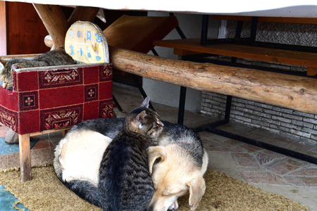 the domestic dog and the cat lie together as best friends Imagens