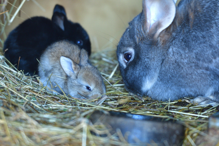 Animal love mother with smalll rabbit in the lair with hay
