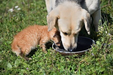 Big dog and small cat eat milk together Imagens
