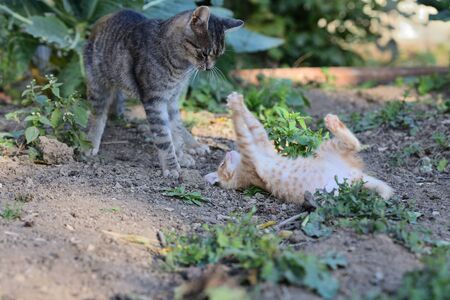 small cats playful together on the grass 免版税图像