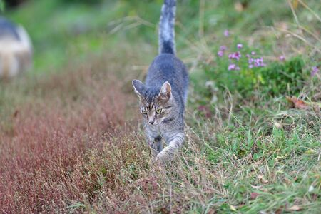 little cats jump and larking together on the grass Stockfoto