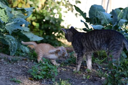 small cats playful together on the grass Stockfoto - 134296665