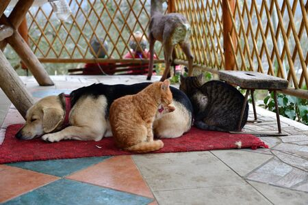 Dog and two cats to snuggle each other as best friends Фото со стока