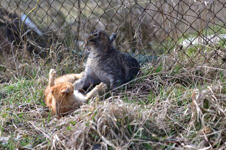 Two cats playing together on the grass meadow