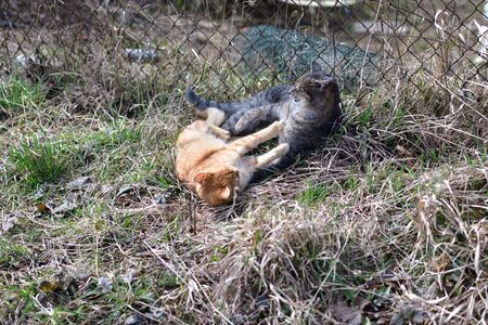 Two cats as best friends fight together in animal love