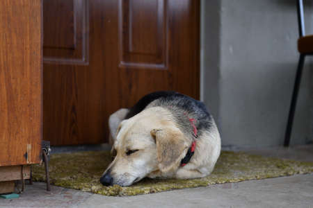 A domestic dog guards the door by the house