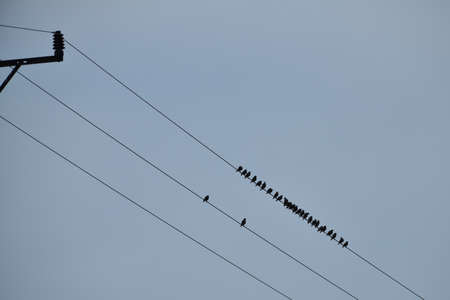 Black silhouette of a thrush bird on a wire electric pole in the blue sky Stock Photo