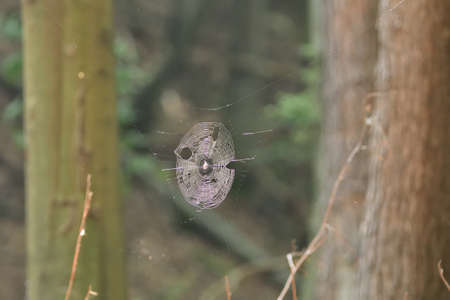 A large woven spider web in the woods among the trees