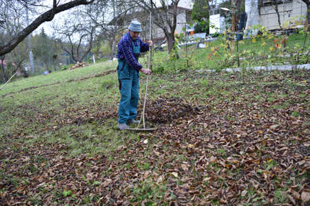A farmer in the village rakes up fallen autumn leaves Stock Photo