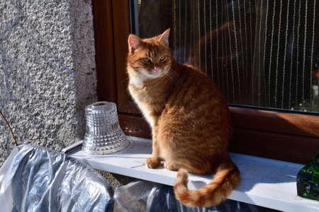 The domestic kitten basks in the winter sun sitting at the windowr 版權商用圖片