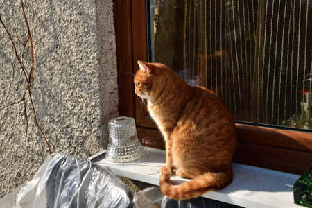 Domestic red cat sits on a window sill in the garden at the cottage in winter 版權商用圖片