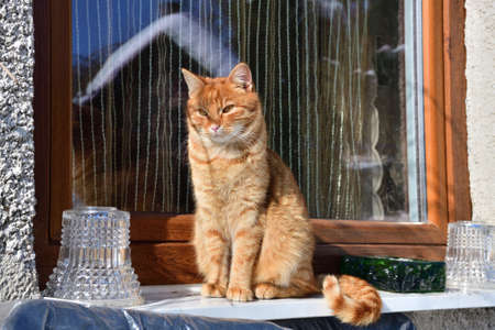 A domestic cat watches the surroundings sitting in front of a window in the village