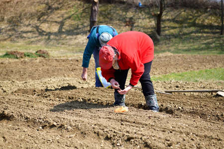 Farmers hand planting vegetable seeds in the spring in the garden