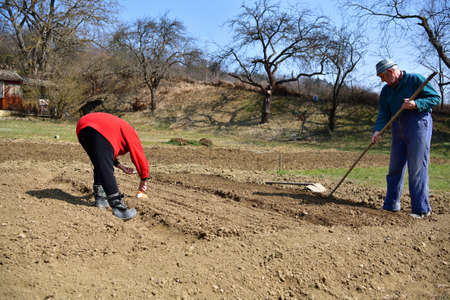 The traditional way of manually planting seeds in the soil with rakes and hoe 版權商用圖片