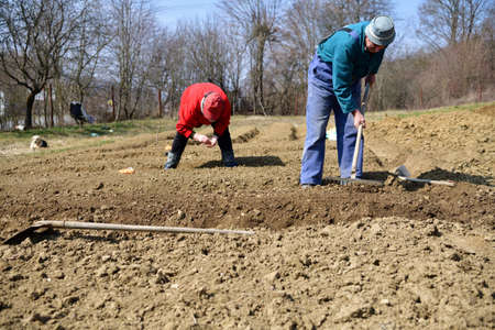 A farmer plants seeds in the soil of in village in springtime 版權商用圖片 - 166984124