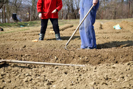 A farmer plants seeds in the soil of in village in springtime