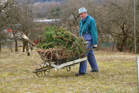 The gardener carries dry grass and branches on a hand wheelbarrow during spring cleaning