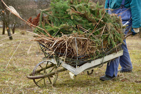Cleaning the lawn in the garden from fallen branches and dry leaves in spring