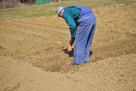 A farmer in an agricultural field bends down and plants seeds in the spring 版權商用圖片 - 167208357