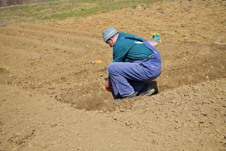 A farmer in an agricultural field bends down and plants seeds in the spring 版權商用圖片