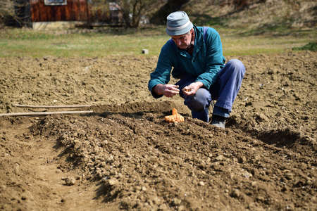The traditional way of hand planting seeds in the spring into the ground in the village in the spring 版權商用圖片