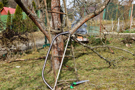 Hand saw garden tools for pruning tree branches in spring