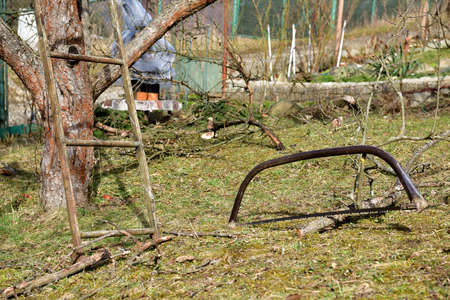 Garden tools for treating trees in spring