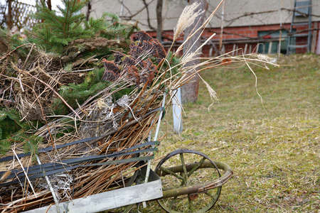 Collecting dry leaves and a branch into wheelbarrow in the spring
