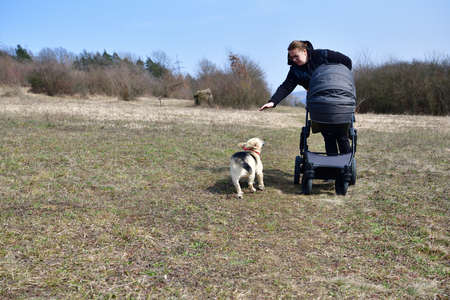 A woman in a black coat prams a child in a baby stroller on a large meadow with dog running beside 免版税图像