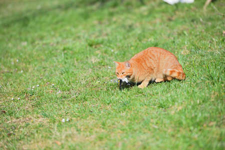 Domestic cats have an instinct by nature to hunt small garden birds